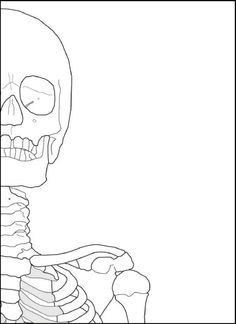 Respiratory system essay