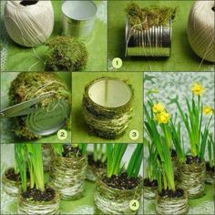 How To Make a Moss Plant Vase