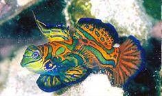 http://best5.it/post/5-pesci-di-straordinaria-bellezza/