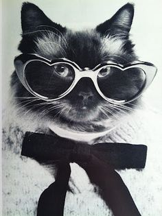 9775e21ff3 37 Best Cats in Sunglasses images