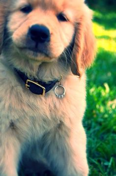 Check out these adorable marriage proposal ideas that involve pets and animals! Check out these adorable marriage proposal ideas that involve pets and animals! These sweet proposal pictures are su