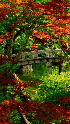 Japanese, Garden, Kyoto, Landscape, Bridge, Tree, Plant