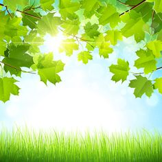 Outdoor backgrounds Iphone Summer Green Leaves With Sunlight Vector Background 03 Green Leaf Background Paper Background Background Pinterest 164 Best Background Outdoor Images Backgrounds Clip Art Board
