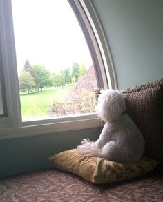 Comfy window seat with nice view -- What more could a dog or cat want? Pet Dogs, Dog Cat, Pets, Doggies, Dog Love, Puppy Love, Baby Friends, Loyal Dogs, Looking Out The Window