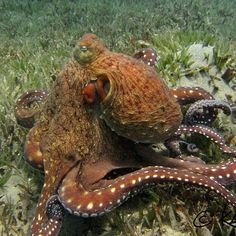 Nice octopus shot from a PADI fan on Instagram