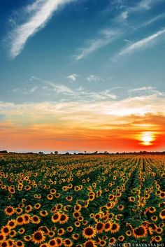 New Painting Sunflower Field Landscapes Ideas Sunflower Pictures, Sunflower Art, Sunflower Fields, Sunflowers Tumblr, Sunflowers And Roses, Sunflower Photography, Nature Photography, Cute Wallpapers, Wallpaper Backgrounds