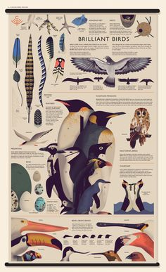 Just a few of the images in Curiositree: Natural World. Science Illustration, Forest Illustration, Graphic Illustration, Fantasy Illustration, Digital Illustration, Animal Posters, Chart Design, Illustrations And Posters, Animal Illustrations