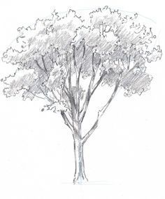 Learn how to draw trees in this simple step by step demonstration of the process of drawing an oak. Oak Tree Drawings, Tree Sketches, Pencil Drawings, Flower Sketches, Pencil Art, Trees Drawing Tutorial, Drawing Ideas, Plant Drawing, Nature Drawing