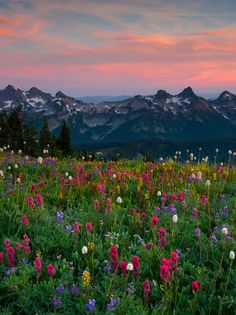 ☀Mount Rainier - Tatoosh Range by Kevin McNeal Nature Aesthetic, Flower Aesthetic, Travel Aesthetic, Mother Earth, Mother Nature, Beautiful World, Beautiful Places, Beautiful Flowers, Images Esthétiques