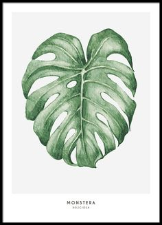 Botanical print with a green leaf.