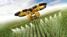 Flying utility drone spraying pesticide over a cornfield, could this be the future of farming?