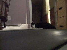 cats vs. treadmill, via YouTube. The interaction between the cats is the funniest part!