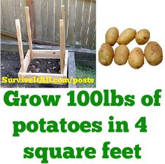 Grow 100lbs of potatoes in 4 square feet!