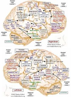 Living with a Thief named Lewy Body Dementia: Visual Learning about Lewy Body De. Brain Anatomy, Medical Anatomy, Anatomy And Physiology, Dementia Awareness, Alzheimer's And Dementia, Disability Awareness, Dementia Care, Lewy Body Dementia Stages, Mapeamento Cerebral