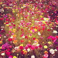 poppy haus: Flower Bomb