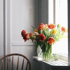 Window sill splendour
