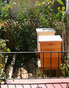 Urban Beekeeping - Photos of Suburban and City Beekeepers - The Daily Green