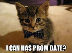 Excited kitten memes about dating