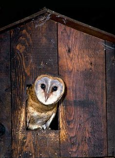 Barn owl nesting boxes.  Each occupied box consumes over 3,000 rodents annually.