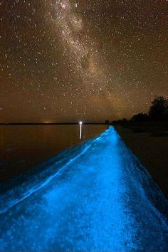 Bioluminescent Bay, Puerto Rico