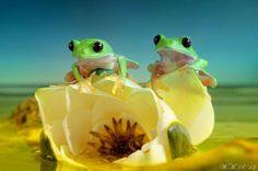 瑞々しい生命力。魅惑的な表情を見せるカエルさん達をマクロ撮影した写真作品