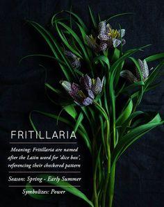 DesignSponge Flower Glossary: Fritillaria