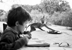 Arthur and the thief monkey, Kenya, Kenya, Wednesday, Monkey, Africa, Photos, Pictures, Playsuit, Photographs, Monkeys