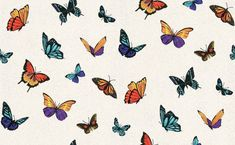 Flutterby (31-175) - Julien Macdonald Wallpapers - A fun butterfly design with a myriad of coloured butterflies on a pearl white shimmering background with holographic glitter.  Paste the wall.