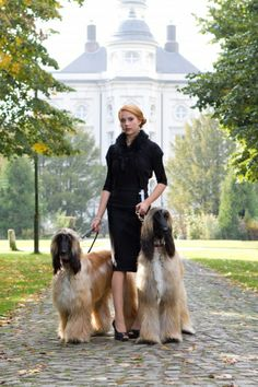 Afghan Hound, Afghans, Dogs, Photography, Animals, Fashion, Moda, Photograph, Animales