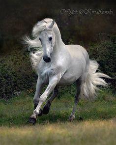 Wojtek Kwiatkowski Equine Photography - amazing equine photographer from Poland