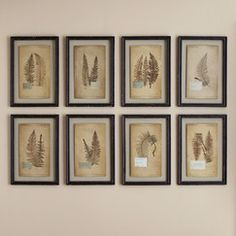 Pressed Ferns Framed Prints (Set of 8) | These prints feature the look of dried, pressed ferns against an aged paper background for a charming vintage touch. Framed behind glass, the prints are center-mounted with no backing for an airy, floating effect. Set of eight.