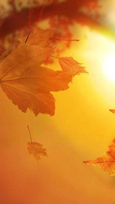 Hoja de otoño fondo de pantalla