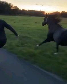 Funny Horses, Cute Horses, Pretty Horses, Horse Love, Beautiful Arabian Horses, Most Beautiful Horses, Animals Beautiful, Cute Little Animals, Cute Funny Animals