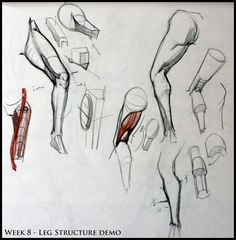 Exceptional Drawing The Human Figure Ideas. Staggering Drawing The Human Figure Ideas. Figure Drawing Tutorial, Male Figure Drawing, Figure Drawing Reference, Anatomy Sketches, Anatomy Drawing, Anatomy Art, Drawing Legs, Life Drawing, Drawing Poses