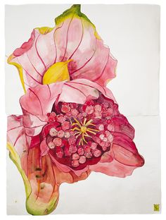 Available for sale from Lyndsey Ingram, Sarah Graham, Medinilla Magnifica V Ink on Paper, 184 × 135 cm Botanical Drawings, Botanical Prints, Sarah Graham Artist, Illustration Blume, Watercolor Projects, Floral Illustrations, Watercolor Flowers, Watercolour, Lovers Art