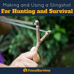 Making and using a slingshot for hunting and survival. #survival #hunting #shtf #emergencyprepardness #primalsurvivor