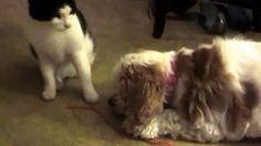 Kitty Shares with Dog https://www.youtube.com/watch?v=jYiWWwVK0mA