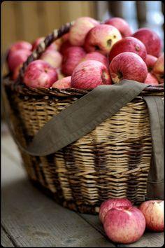 Apple Harvest in a Wicker Basket . Apple Harvest, Harvest Time, Fall Harvest, Bountiful Harvest, Apple Farm, Apple Orchard, Fruits Decoration, Red Apple, Apple Tea