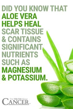Did you know that Aloe Vera helps heal scar tissue & contains significant nutrients such as magnesium & potassium?! The gel from the aloe vera plant has long been known for its burn healing properties, and it is a natural antiseptic. Click on the image above to learn more on how it can also prevent radiation burn (Radiodermatitis). Please pin to save for later!