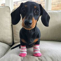 📣NOTE❗Best Dachshund 👕 & Hoodies EVER in @thedoxieworld profile❗ 💯Satisfaction guarantied❗😉 Worldwide shipping🌍📦 🐶To be featured👉 #thedoxieworld 📸 Credit: @martha_dachshund