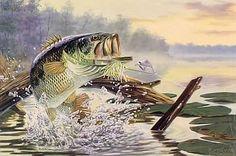 Buzz Off Large mouth Bass Fish wall art painting Best Bass Fishing Lures, Trout Fishing, Fishing Boats, Fishing Reels, Bass Fishing Pictures, Image Of Fish, Fish Wall Art, Fish Tales, Fish Drawings