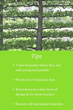 Learn all about the art of espalier and maintaining these artistic trees! Buy Fruit Trees, Growing Fruit Trees, Growing Seeds, Fruit Tree Nursery, Artistic Tree, Tree Identification, Seeds For Sale, Tree Seeds, Grass Seed