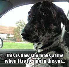 Dogs Face When I Sing In The Car cute animals dogs adorable dog puppy animal pets funny animals funny pets funny dogs Funny Animal Pictures, Dog Pictures, Funny Animals, Cute Animals, Cute Puppies, Cute Dogs, Singing In The Car, Dog Memes, Funny Memes