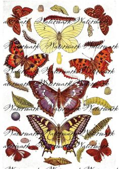 Digital Vintage Collage of Butterflies by MyVintageCollections, $0.99