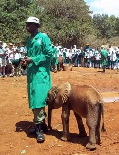 Baby elephant with its keeper at The David Sheldrick Wildlife Trust, Nairobi, Kenya. See how tiny it is? <3 #ivoryforelephants #stoppoaching #elephants for #ivory ! #animals #dswt