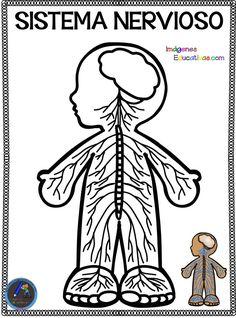 Cuaderno del Cuerpo Humano para colorear - Imagenes Educativas Elementary Science, Science For Kids, Science And Nature, Kindergarten Activities, Science Activities, Seed Crafts For Kids, Body Preschool, Human Body Activities, Halloween Activities For Kids
