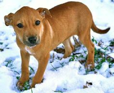 Lola is a sweet and gentle Lab/Hound mix. She is 12 weeks old and weighs a healthy 16 lbs but it wasn't always this way for Lola. She once belonged to a family that knew nothing about caring for a puppy. Lola was just about starved to death...