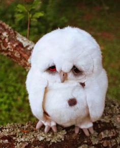 The World's Saddest Owl