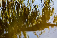 Willow tree reflections in water by Nina Matthews Photography, via Flickr