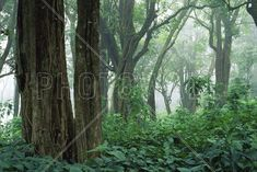 Tropical Forest - Fototapeter & Tapeter - Photowall